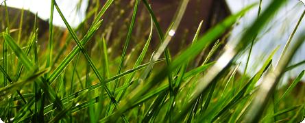 Macro Nature - Grass
